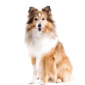 Loppemiddel til hund