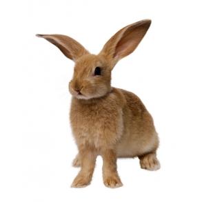 Kaniner & Gnavere