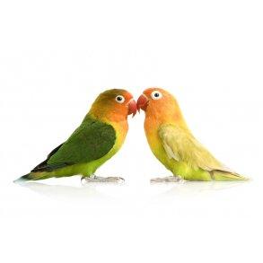 Voliere- og havens fugle