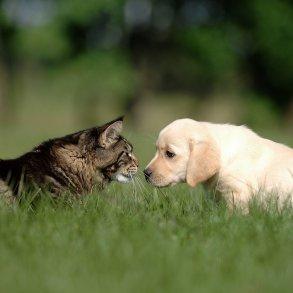 Hund & Kat