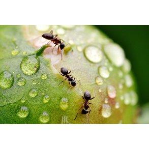 Insekter & Skadedyr