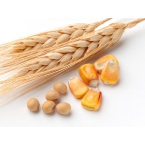 Korn, majs og ærter